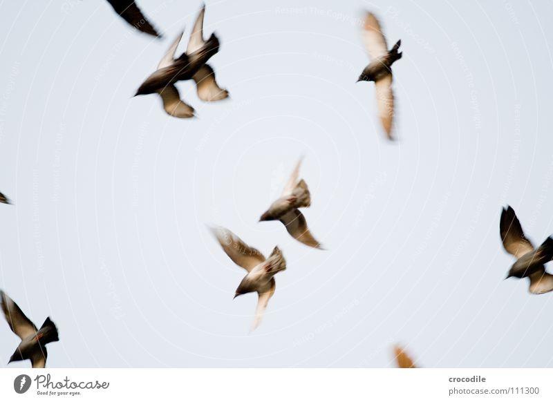 die Vögel ll Himmel Freiheit Luft Vogel fliegen Feder Flügel Schweben Taube Schnabel Tier