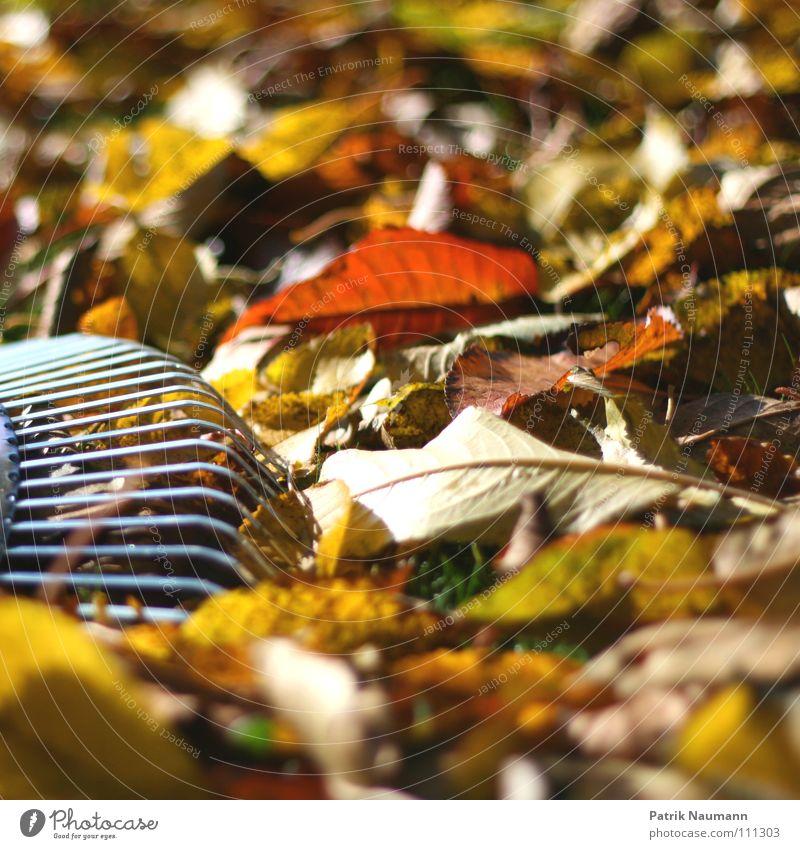 typische Herbstarbeit... Baum Blatt Einsamkeit Arbeit & Erwerbstätigkeit Holz Wärme Metall Physik fallen herbstlich Holzmehl Rechen