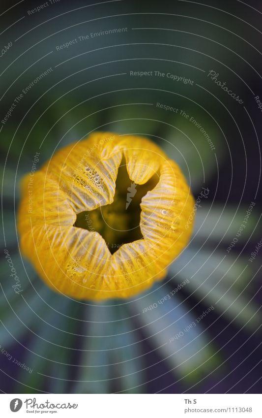 Frühling Natur Pflanze Blüte Blühend Duft ästhetisch authentisch einfach elegant frisch natürlich gelb grün Frühlingsgefühle Farbe einzigartig schön harmonisch