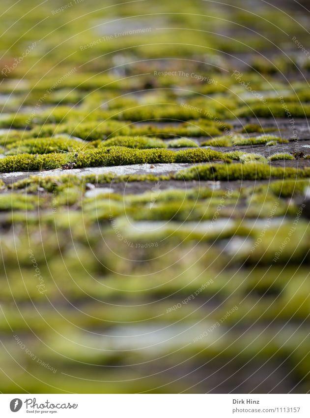 Moos Natur alt Pflanze grün Landschaft Umwelt Wege & Pfade Mauer klein Garten braun Park Wachstum weich Vergänglichkeit Wandel & Veränderung