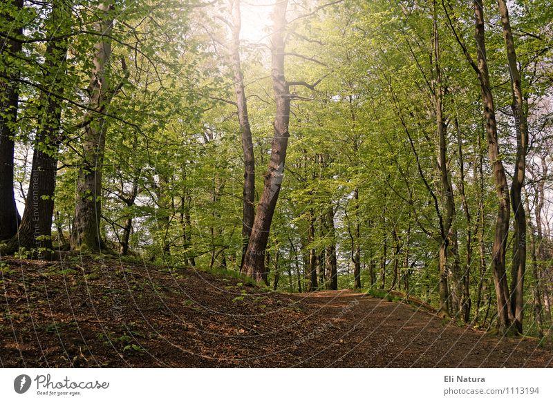 Waldgeflüster Natur Landschaft Pflanze Tier Erde Sommer Schönes Wetter Baum Grünpflanze Waldboden Waldlichtung Holz wandern Wärme braun mehrfarbig gelb grün