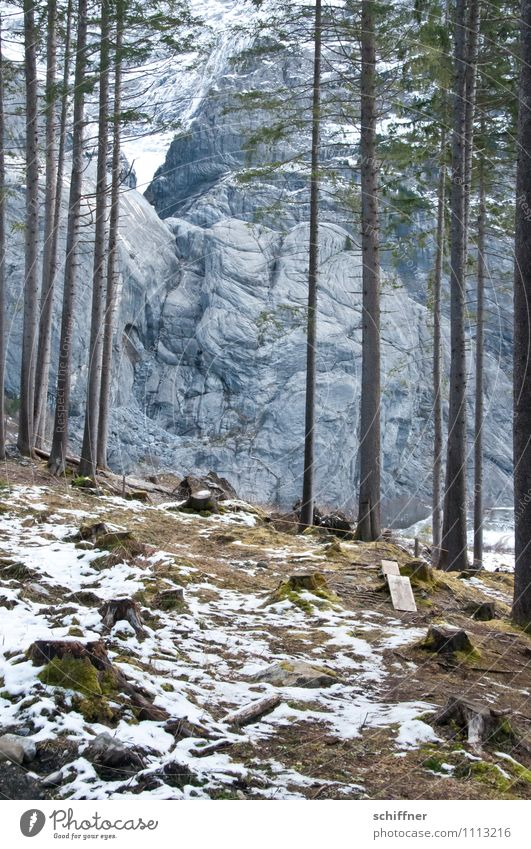 Gewaldig felsig Schnee Baum Felsen Alpen Berge u. Gebirge kalt Tanne Kiefer Wald Waldboden Waldlichtung Waldrand Winter Felswand massiv Gesteinsformationen
