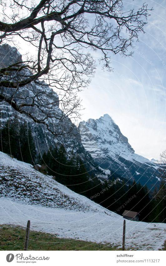 Eigentlich Eiger Natur Baum Landschaft kalt Umwelt Berge u. Gebirge Wiese Felsen Klima Schönes Wetter Gipfel Alpen Schneebedeckte Gipfel Klimawandel Gletscher