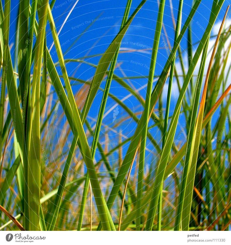 Lake Michigan Schilf Himmel grün blau Sommer Strand Ferien & Urlaub & Reisen ruhig Wolken Erholung träumen See Sand Erde Küste schlafen