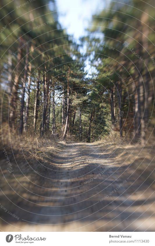 Es gibt Lenz, Baby! Umwelt Natur Pflanze Baum Gras Wald blau braun grau grün Fußweg Linse Tilt-Shift Tunnelblick Dynamik Richtung Geschwindigkeit