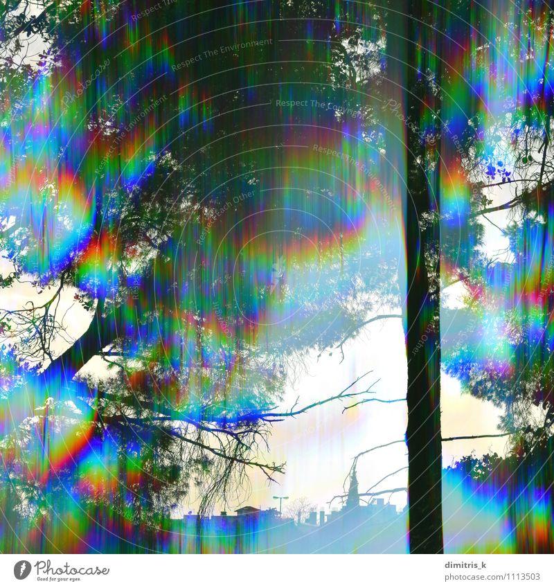 prism Bäume Landschaft Natur Stadt Pflanze Farbe Baum Blatt Wald Bewegung Gebäude hell Park träumen erleuchten Beautyfotografie Zweig