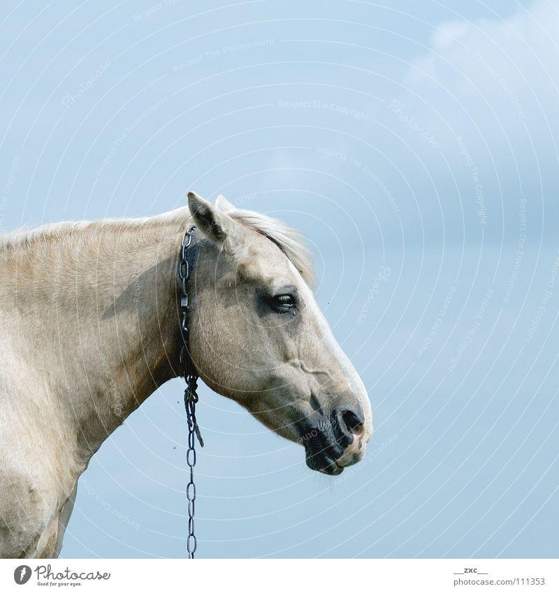 pf__erd Pferd Tier Wolken gelb Himmel blau