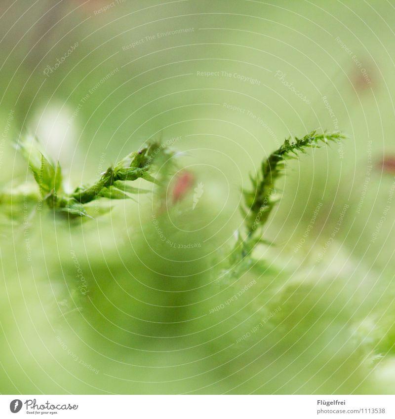 Der Frühling kommt Natur Pflanze grün Blatt Wald Umwelt Leben Wachstum Moos