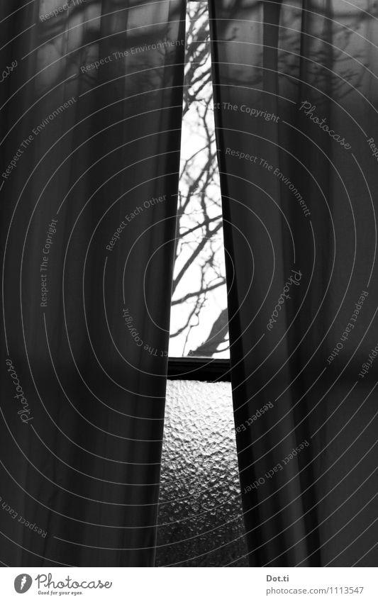 Hof Wohnung Raum Fenster dunkel trist Stimmung träumen Sehnsucht Einsamkeit Vorhang Baum Ast Fensterblick Gardine Stoff Altbau Durchblick Glasscheibe