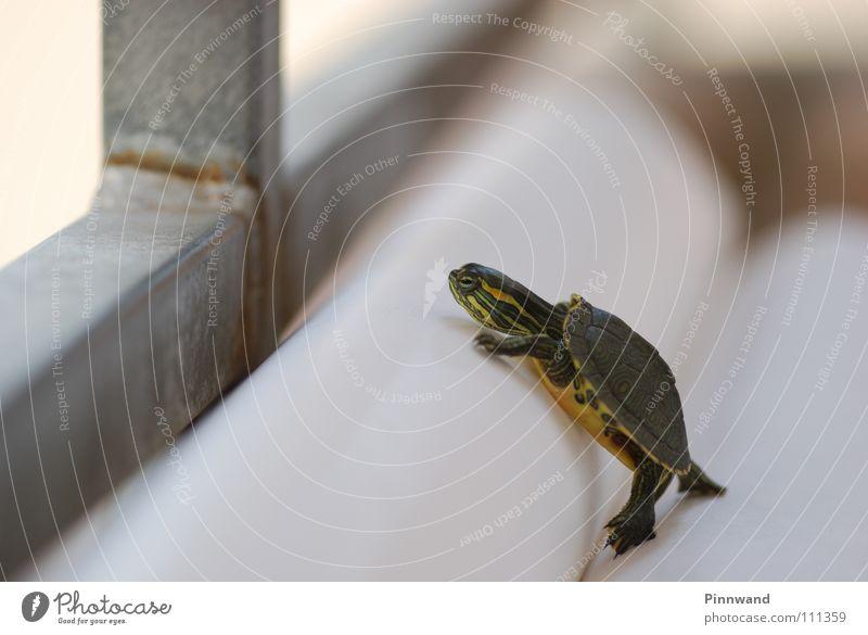 mind the gap! Barcelona Schildkröte klein fein süß erobern Absturz klug dumm Balkon Papier orientierungslos gelb grün Grüne Meeresschildkörte Beweis volles Rohr