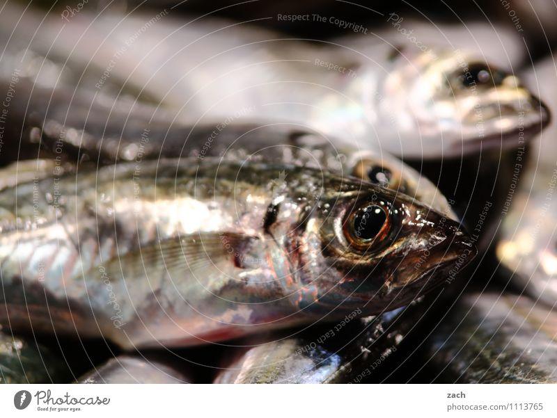 ... und danke für den Fisch Lebensmittel Ernährung Mittagessen Abendessen Vegetarische Ernährung Sushi Tier Totes Tier Schuppen 3 Essen grau Völlerei Ekel