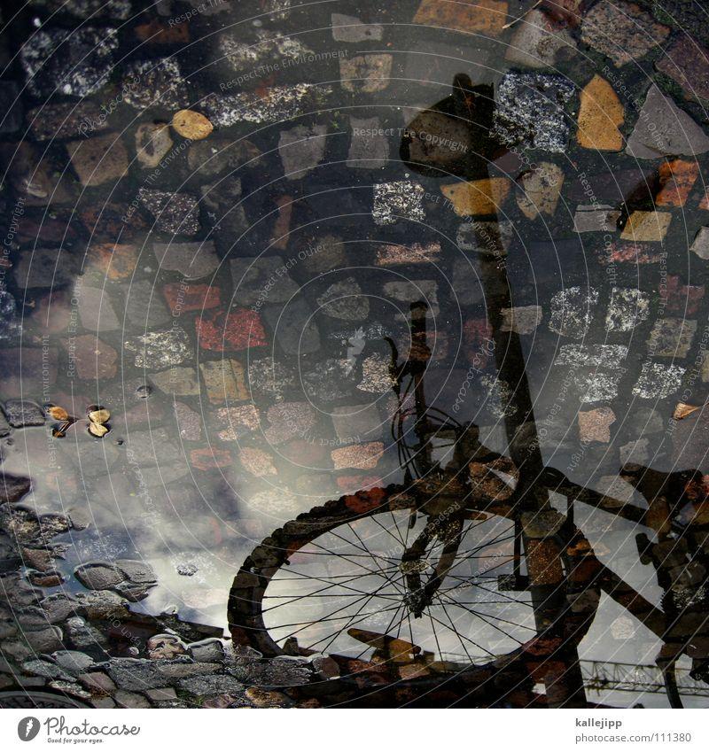 alte liebe rostet nicht Wasser Stadt Baum Blatt Haus Straße Herbst grau Bewegung Regen Wetter Wohnung Fahrrad nass Häusliches Leben Streifen