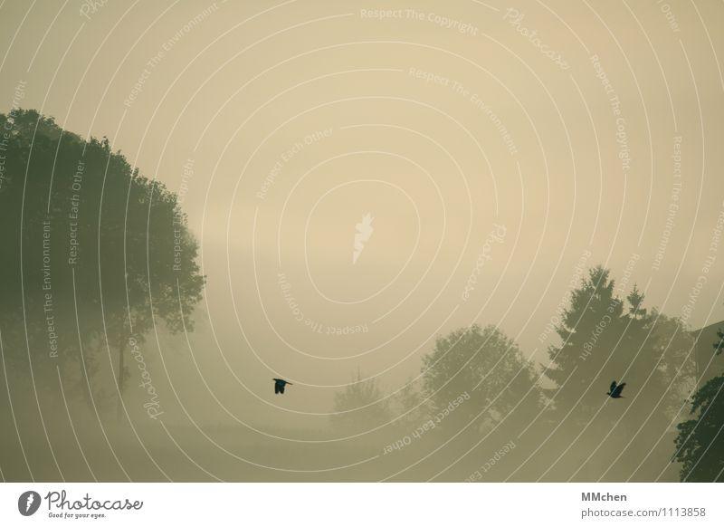 Wir zwei Erholung Ferien & Urlaub & Reisen Abenteuer Freiheit Expedition Natur Urelemente Herbst Nebel Baum Wald fliegen Gefühle Freude Zufriedenheit Vertrauen