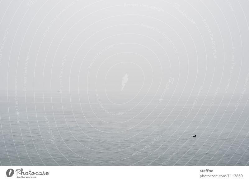 Alles fließt (nicht immer): Genfer See Natur Wasser Landschaft Winter Umwelt grau Nebel trist schlechtes Wetter