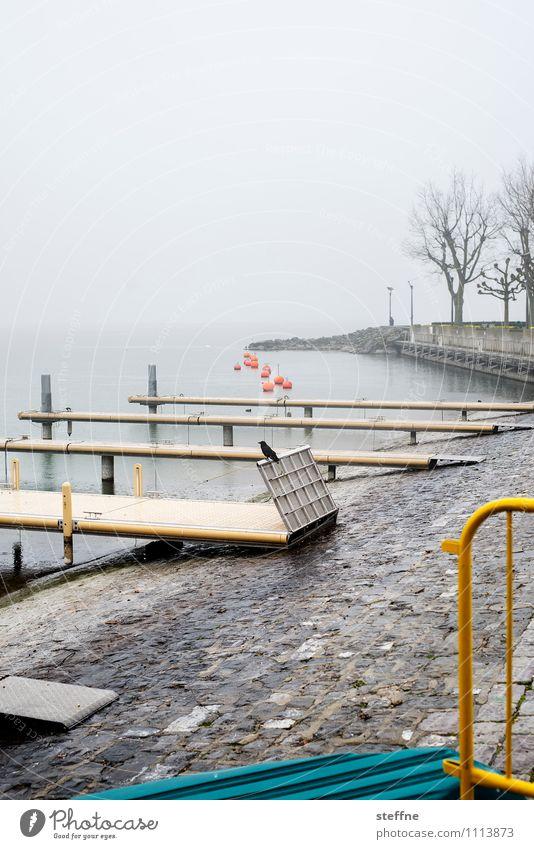 Landungsbrücken Frühling Herbst schlechtes Wetter Regen Baum Schifffahrt Bootsfahrt Hafen trist Rabenvögel Genfer See Lausanne Steg Seeufer Anlegestelle