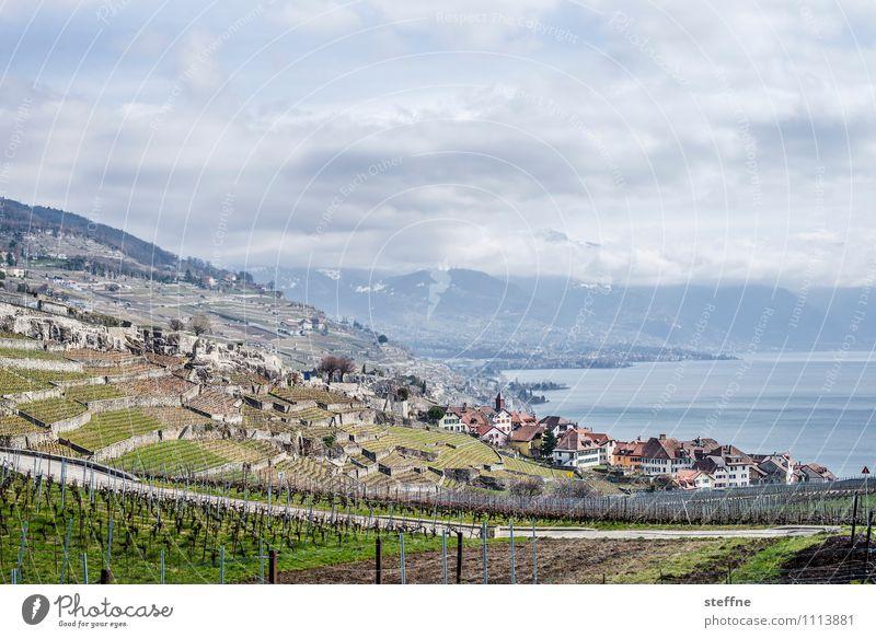 Chexbres Landschaft Wolken Berge u. Gebirge Tourismus Seeufer Alpen Dorf Schweiz Weinberg Weinbau Lausanne Genfer See Lac Lèmon
