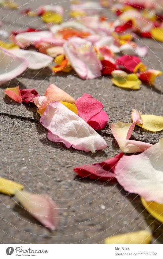 reste vom feste Lifestyle Freude Glück Hochzeit Pflanze Blume Blatt gelb rosa rot Romantik verteilen Bodenbelag Blütenblatt Hochzeitszeremonie Tradition