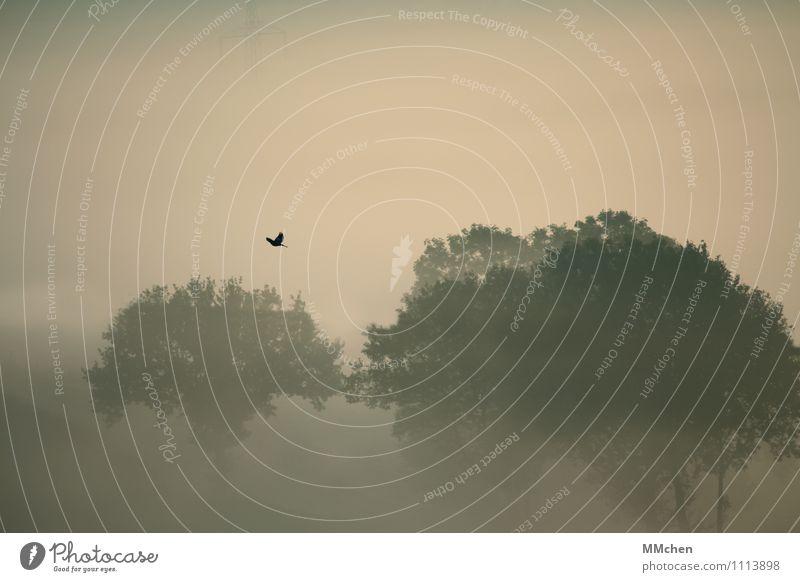 MorgenSchimmer Erholung Ferien & Urlaub & Reisen Abenteuer Freiheit Expedition Natur Urelemente Herbst Nebel Baum Wald fliegen Gefühle Freude Zufriedenheit