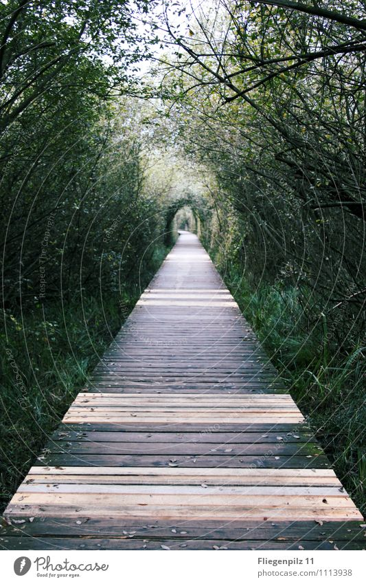 StegWeg Natur Pflanze grün Sommer Baum ruhig Ferne Wald Gras natürlich Wege & Pfade hell Park Kraft Sträucher Beginn