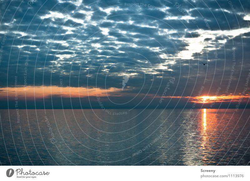 Bodensee Natur Landschaft Wasser Himmel Wolken Sonne Sonnenaufgang Sonnenuntergang Sommer Wellen See glänzend ruhig Horizont Farbfoto Außenaufnahme Menschenleer