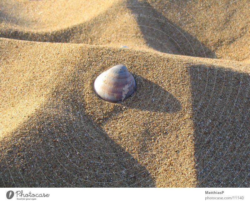 Stern im Sand Strand Muschel Meer See Sommer Küste muschl Stern (Symbol)