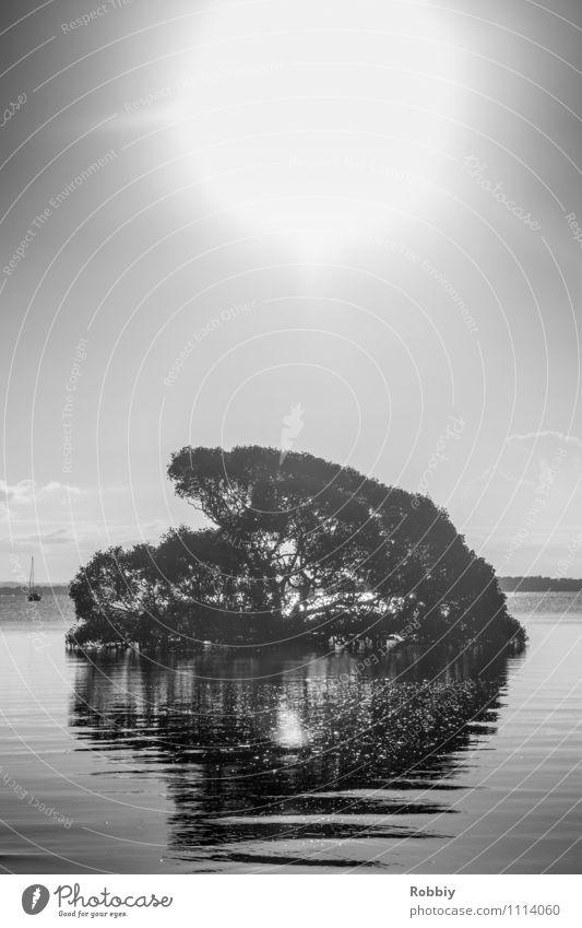 Photosynthese Natur Landschaft Pflanze Luft Wasser Wolkenloser Himmel Sonne Sonnenlicht Schönes Wetter Baum Bucht Meer Insel See Fluss Idylle Umwelt