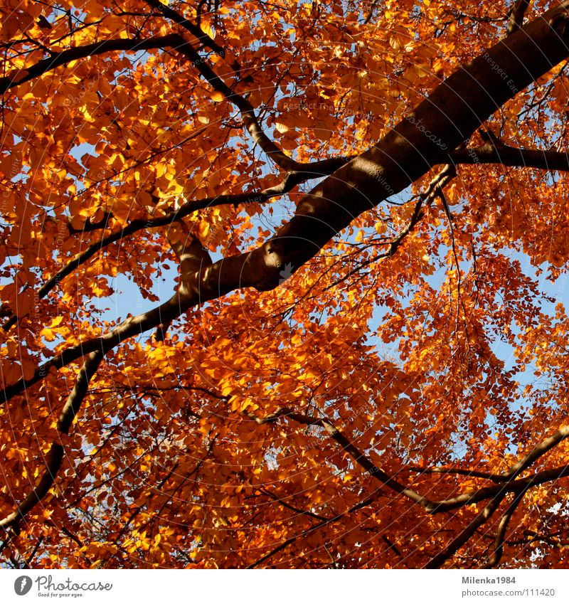 Herbstfarben Oktober November Baum Wald Park Blatt rot gelb Außenaufnahme Ast Spaziergang