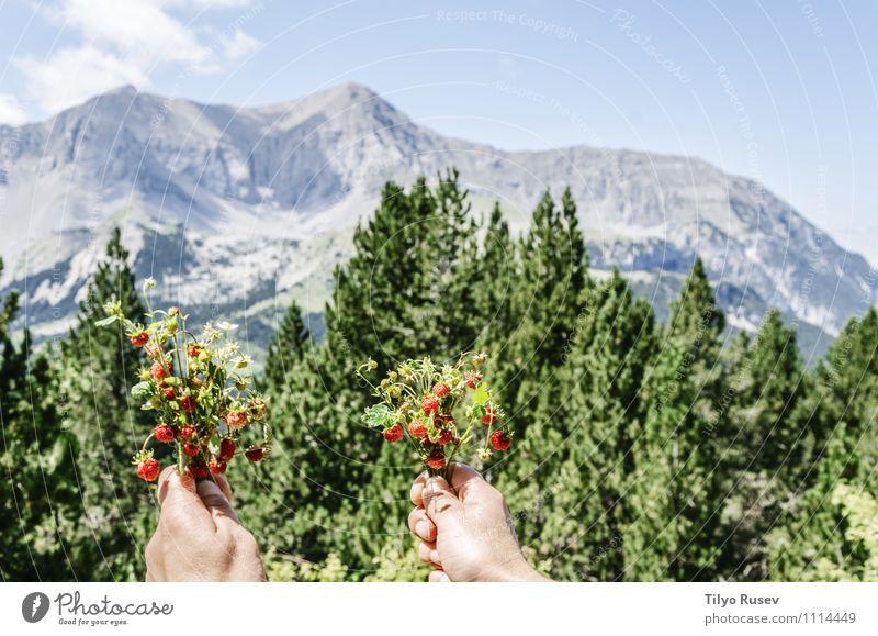 Natur Pflanze schön grün rot klein Frucht wild Spanien Erdbeeren Navarra