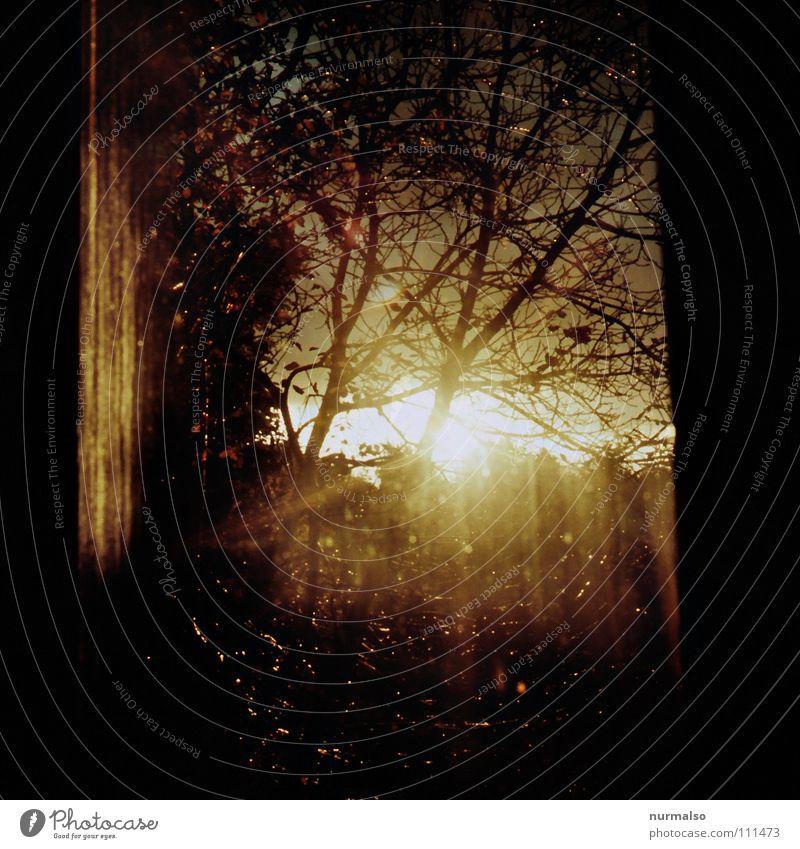 Guter Morgen IIa Natur schön Baum Sonne Freude Farbe Fenster Freiheit Zeit Stimmung orange Glas Nebel Seil Frost Bett