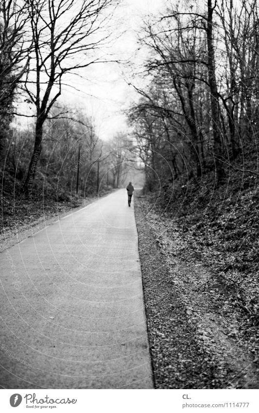 laufen Freizeit & Hobby Sport Joggen Mensch Erwachsene Leben 1 Baum Wald Verkehrswege Fußgänger Straße Wege & Pfade gehen ruhig Natur Perspektive Ziel Zukunft
