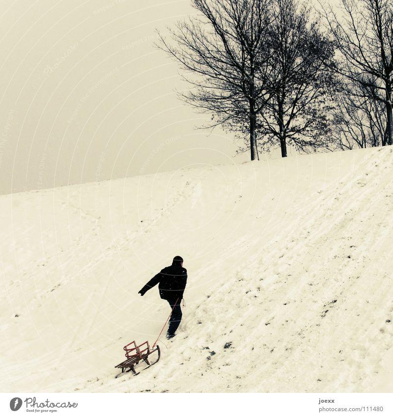 Der Bär groovt Baum aufwärts erobern durchbeißen Hügel kämpfen Mann Schlitten Rodeln Schnee Winter Spielen Erfolg holzschlitten kinderschlitten Freude ziehen