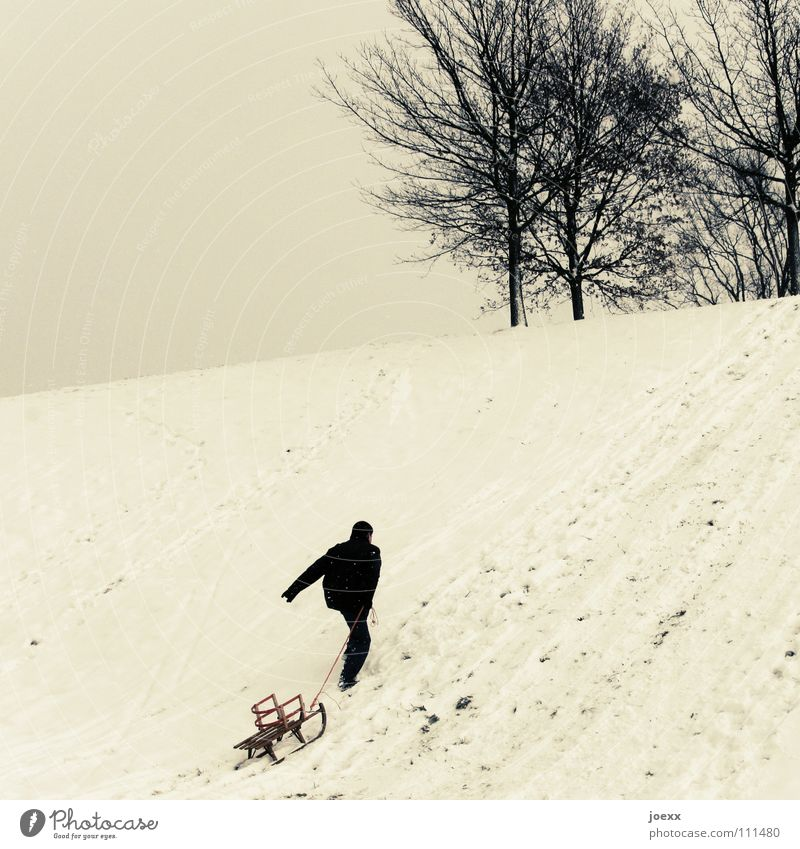 Der Bär groovt Mann Baum Freude Winter Schnee Spielen Erfolg Hügel aufwärts kämpfen ziehen Schlitten erobern Rodeln durchbeißen Rodelbahn