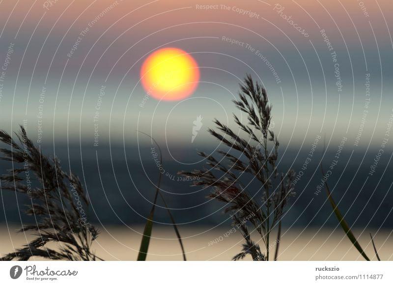 Sonnenuntergang, Gras, Schilf, Siluette, Abendrot, Wasser Meer Landschaft Wolken Stimmung Schilfrohr Abenddämmerung Nordsee Himmelskörper & Weltall Eindruck