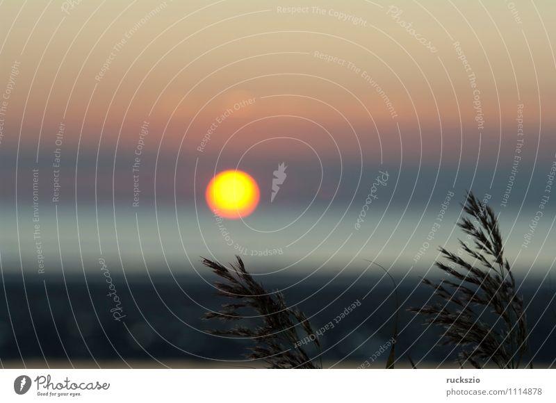 Sonnenuntergang, Gras, Schilf, Siluette, Abendrot, Himmel Wasser Sommer Meer Landschaft Strand gelb See Stimmung orange Schilfrohr Abenddämmerung Eindruck