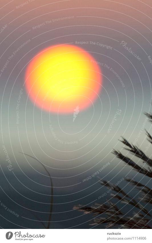 Sonnenuntergang, Gras, Schilf, Siluette, Abendrot, Strand Meer Landschaft Wasser Himmel Wolkenloser Himmel Sonnenaufgang Sonnenlicht Sommer Nordsee See gelb