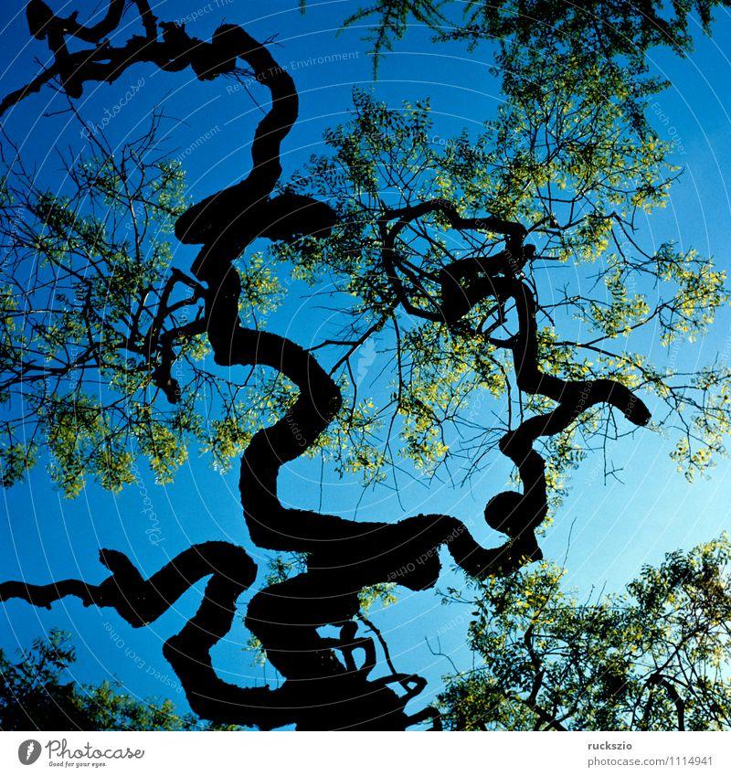 Astsiluette Natur Pflanze Baum Wald außergewöhnlich Stimmung Park planen Botanik Blauer Himmel Laubbaum Eindruck