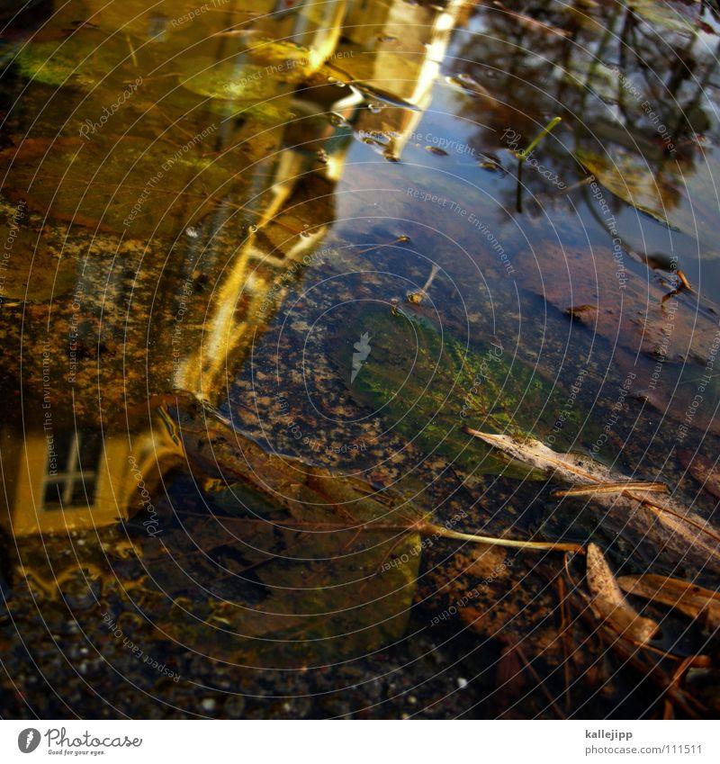lecker creatures Pfütze Herbst Reflexion & Spiegelung Haus Wohnung Mieter Vermieter Blatt Baum laublos nass feucht grau schlechtes Wetter Tiefdruckgebiet tief