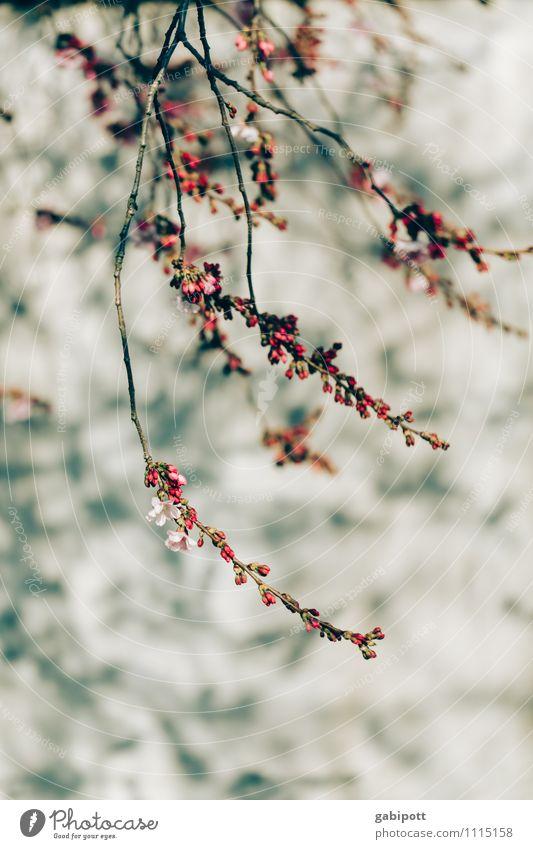 wandschmuck Pflanze Sonnenlicht Frühling Schönes Wetter Sträucher Blüte Blühend Freundlichkeit Fröhlichkeit frisch rosa Gefühle Stimmung Freude Glück