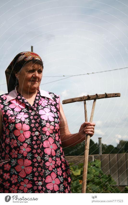 die zähne des rechen Frau Großmutter alt Wachstum Ruhestand Landwirt Bauernhof Tier Landwirtschaft Ernährung Zerealien Vitamin Gras Stroh trocken trocknen edel