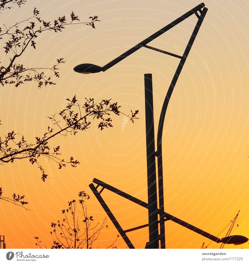 laaaterne, laterne, sonne, mond und steeeeerne Himmel Natur Baum Sonne Winter Sommer Blatt Herbst Straße Beleuchtung Zusammensein Raum Design modern neu Sträucher