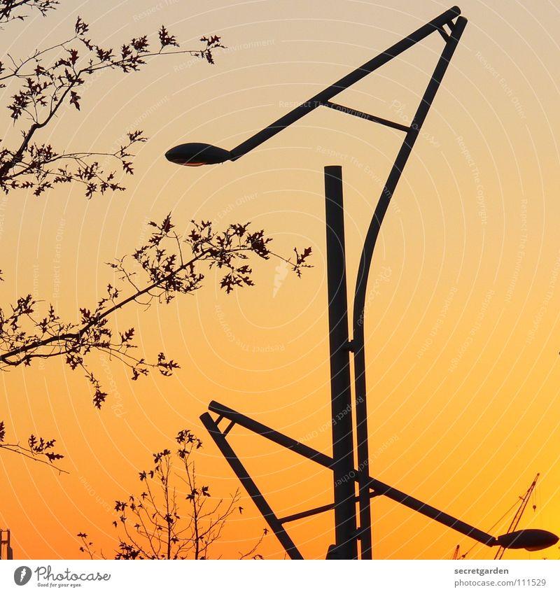 laaaterne, laterne, sonne, mond und steeeeerne Laterne Sonnenuntergang Winter Herbst Sommer Baum Sträucher Raum neu Blatt Silhouette Himmel Straßenbeleuchtung