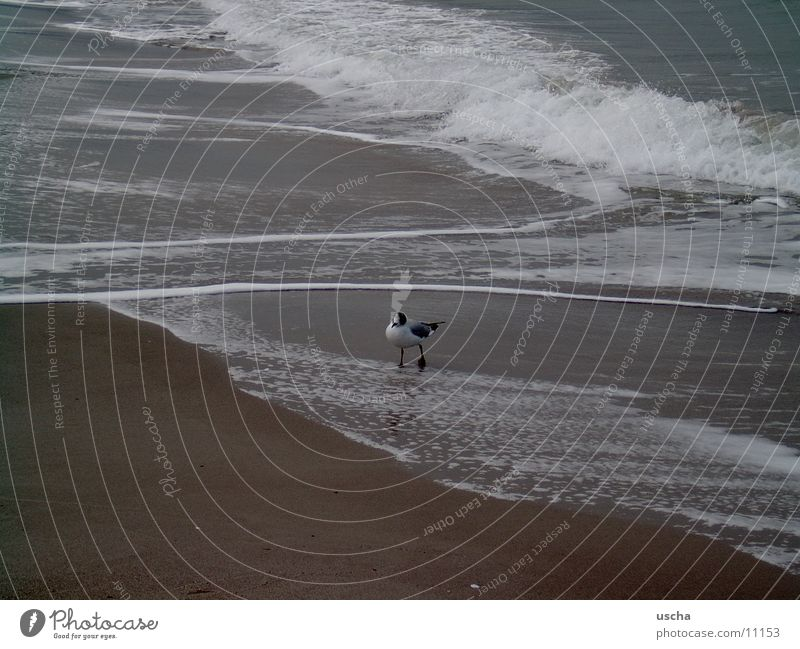 meer1 Meer Strand Sand Möwe