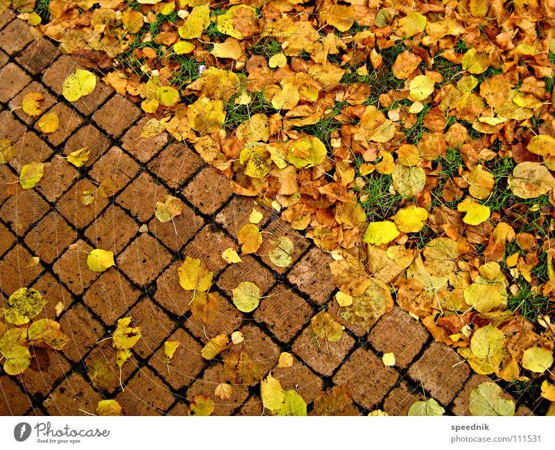 absteigende Diagonale gelb rot Herbst Blatt Park Kirchplatz Landschaftsformen Fuge Furche Dreieck Physik kalt Erntedankfest Jahreszeiten grün Wiese diagonal