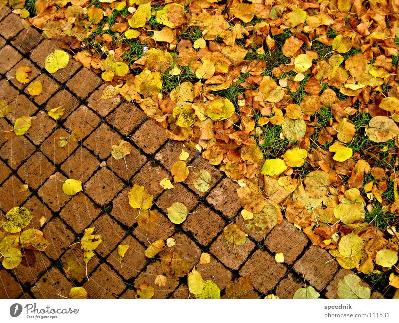absteigende Diagonale grün rot Pflanze Blatt Landschaft gelb Wiese kalt Herbst Wärme Stein Garten Park gold gefährlich bedrohlich
