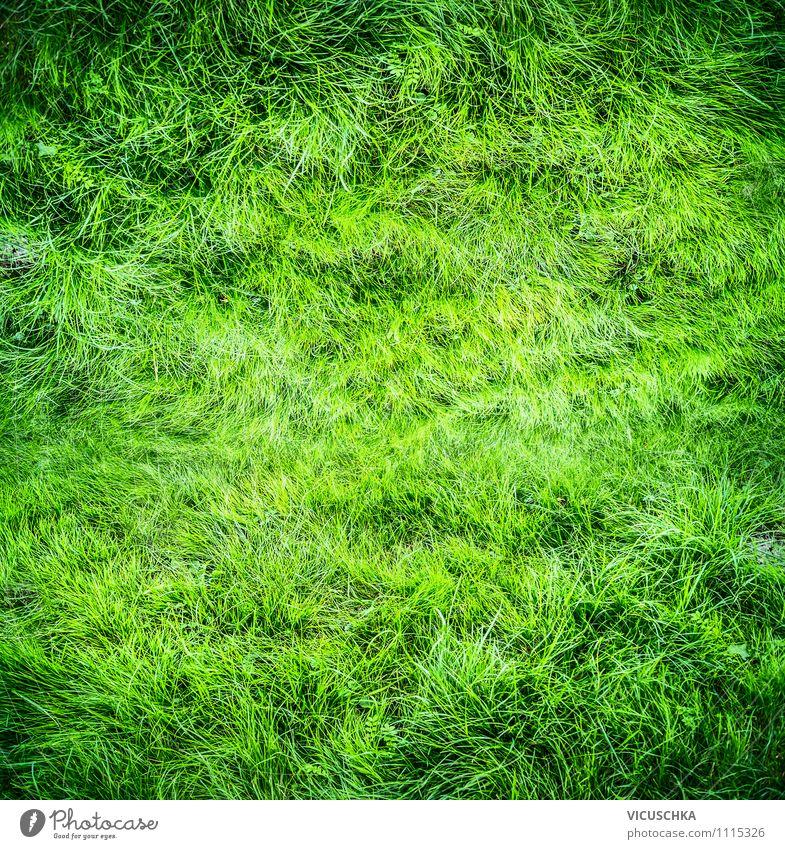 Ein grüner Rasen Natur grün Sommer Freude Farbstoff Wiese Frühling Gras Spielen Hintergrundbild Garten Lifestyle Park Freizeit & Hobby Feld Design