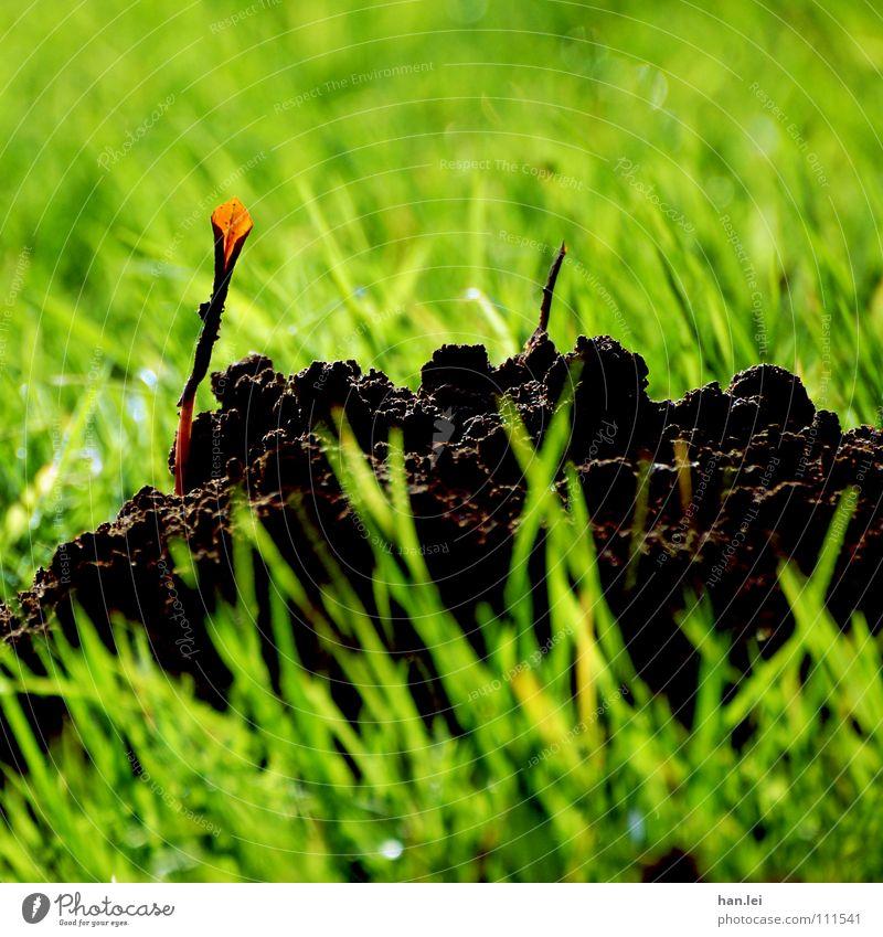 Türdeko Natur Pflanze Blume Tier Wiese Leben Gras Erde Wachstum Dekoration & Verzierung Hügel Eingang Bioprodukte Maulwurf Graben