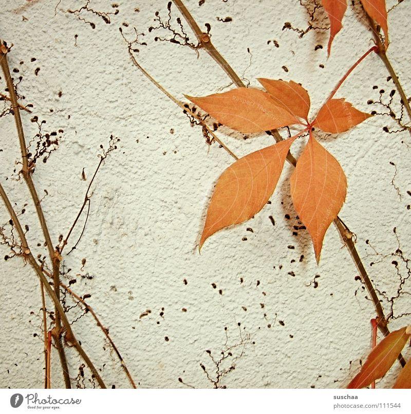 .. das letzt blatt ......... Blatt Farbe kalt Herbst orange Ast Stengel Jahreszeiten Kletterpflanzen