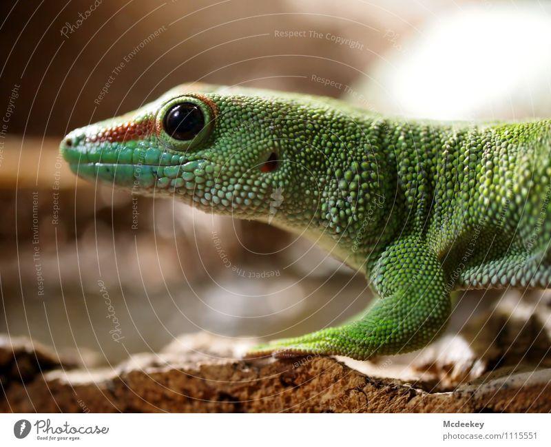 Stopp! Nicht bewegen! Natur grün weiß rot Tier schwarz Umwelt gelb Frühling natürlich Holz grau braun orange Wildtier authentisch