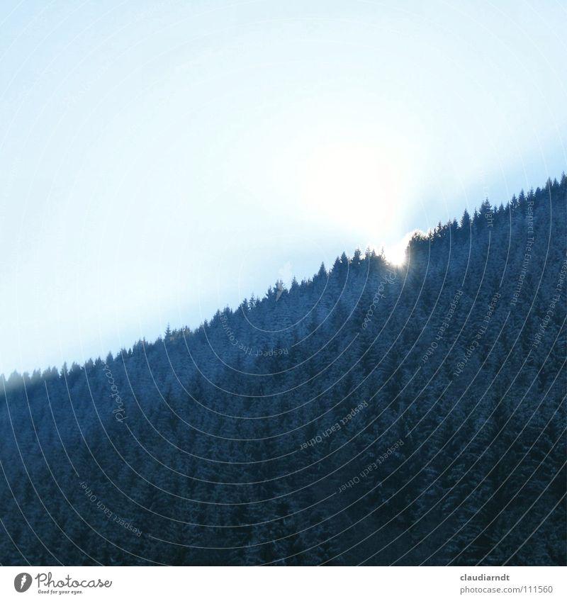 Blauer Wald Spielen Sonne Winter Berge u. Gebirge Nebel Hügel Treppe Traurigkeit dunkel hell kalt verrückt blau Hoffnung Überraschung Berghang Nadelwald