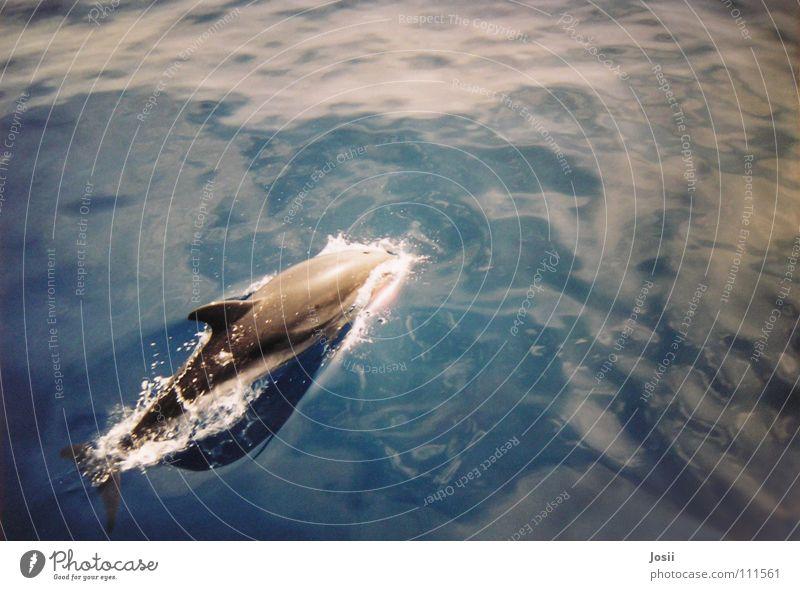 Freiheit ist Meer Wasser schön Himmel blau Sommer Freude Strand Tier gelb springen grau Wärme Wasserfahrzeug Graffiti Wellen